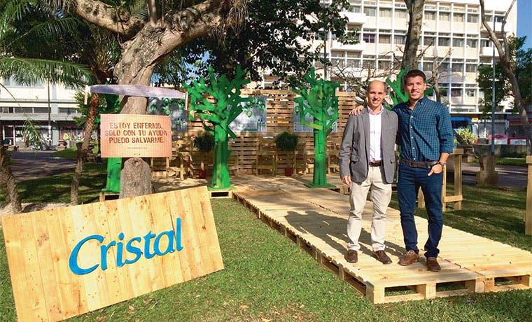 """Cristal """"sanará"""" 100 árboles de parques capitalinos"""