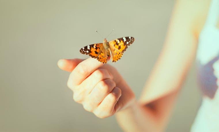 Las mariposas invadirán San José