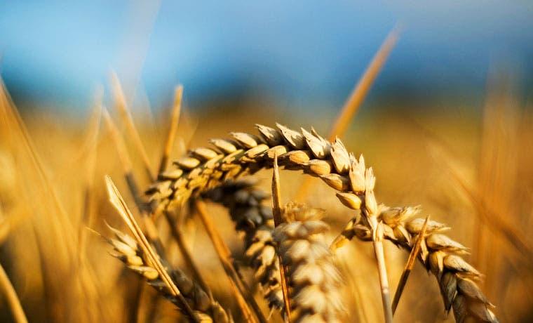 Región unida para alcanzar la seguridad alimentaria