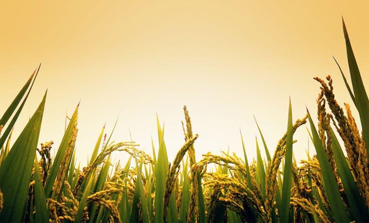 Agricultores preocupados por condiciones para producir y exportar