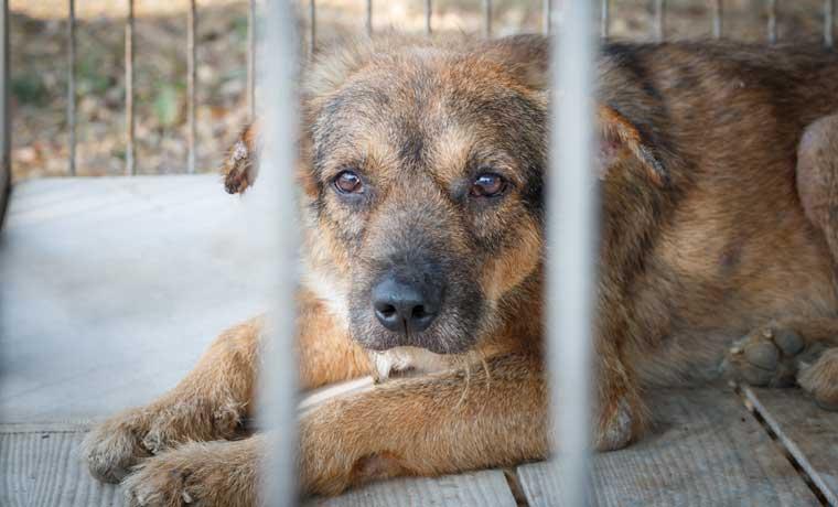 Cárcel para agresores de animales a un paso de aprobarse