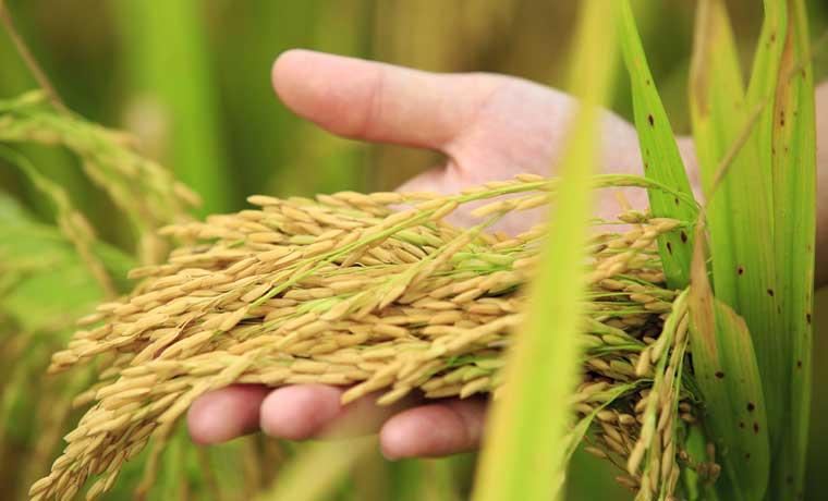 País no podría hacer frente a crisis alimentaria