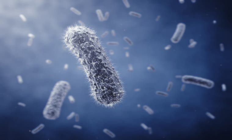 Estudio para vacuna contra bacteria hospitalaria requiere voluntarios