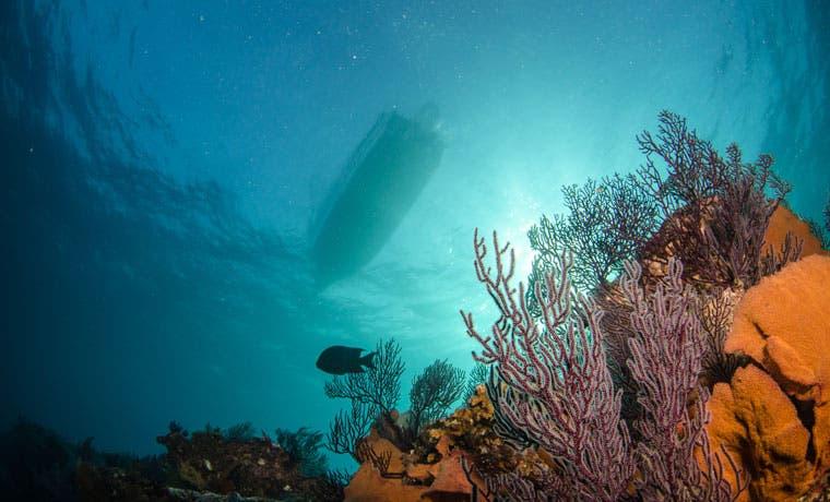 Mitad del patrimonio natural mundial está amenazado, según WWF