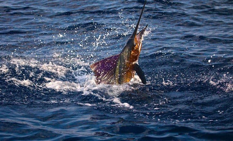 Costa Rica será sede de Campeonato Mundial de Pesca