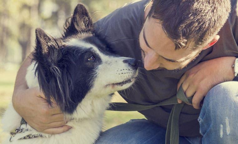 Magistrados no ven ilegalidad en ley contra el maltrato animal