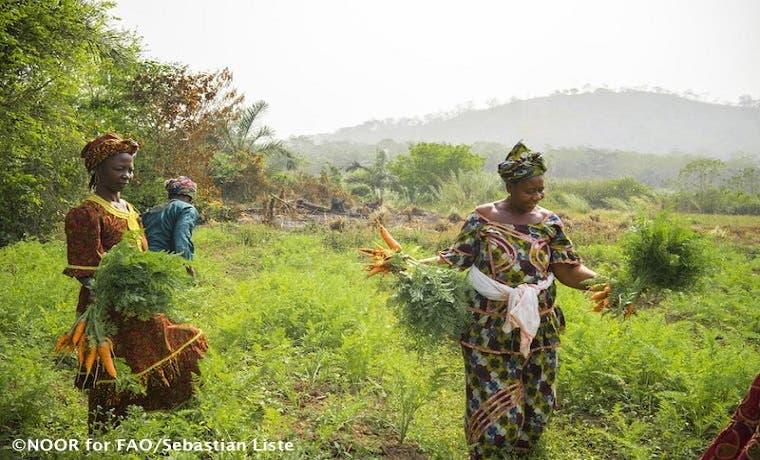 Ecosistemas mundiales son la base de la seguridad alimentaria, según FAO