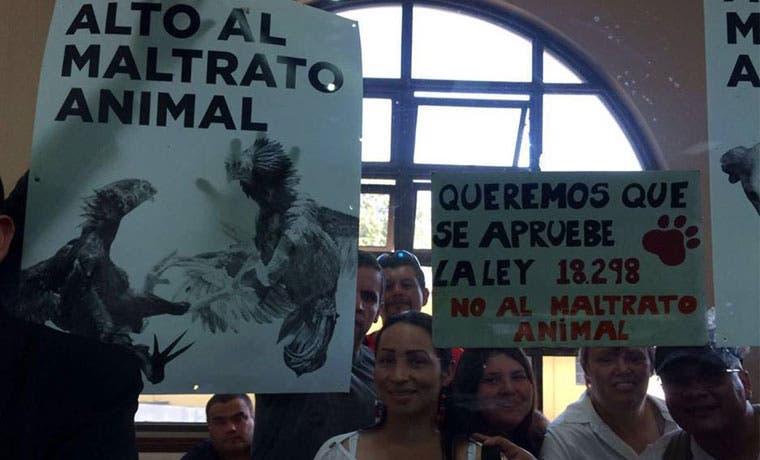 Defensores de animales convocan a concentración mañana frente a Asamblea Legislativa