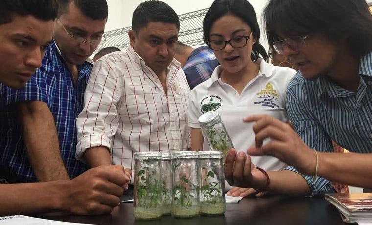 Centroamérica introducirá producción de yuca mejorada