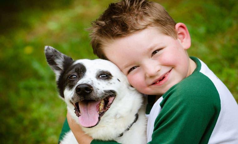 Recolecta de firmas para referéndum sobre ley de bienestar animal iniciará en julio