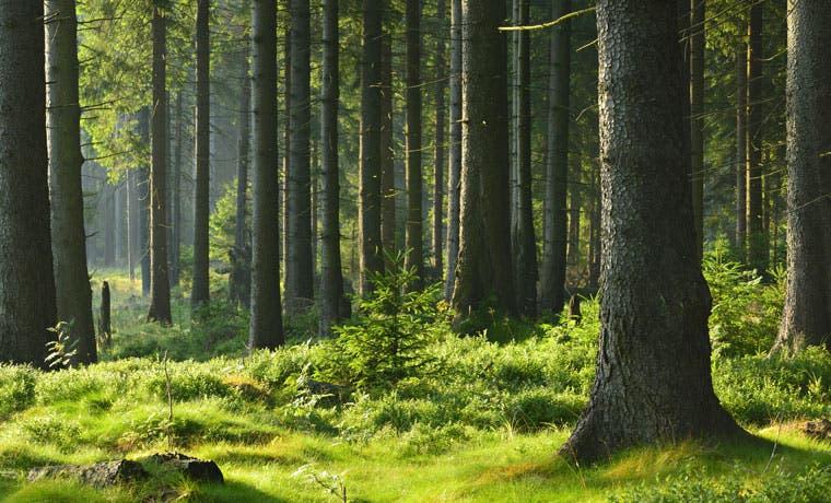 Bosques aportaron a economía nacional un 2,4% del PIB entre 2011 y 2013