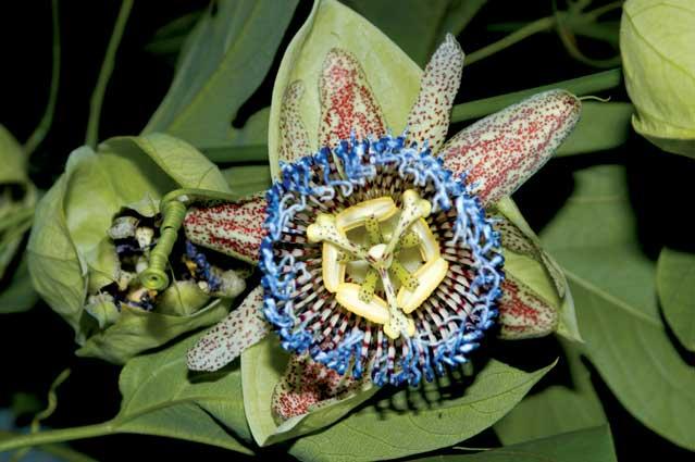 Toda la biodiversidad del país contenida en un atlas online