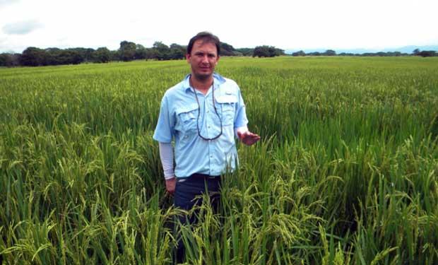 Alternativa para producir arroz con menos químicos gana Medalla del Mérito Agrícola