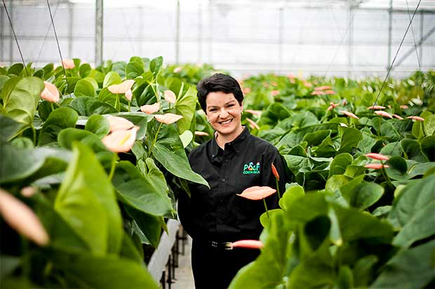 Empresa tica apuesta por innovación ante caída en exportación de flores
