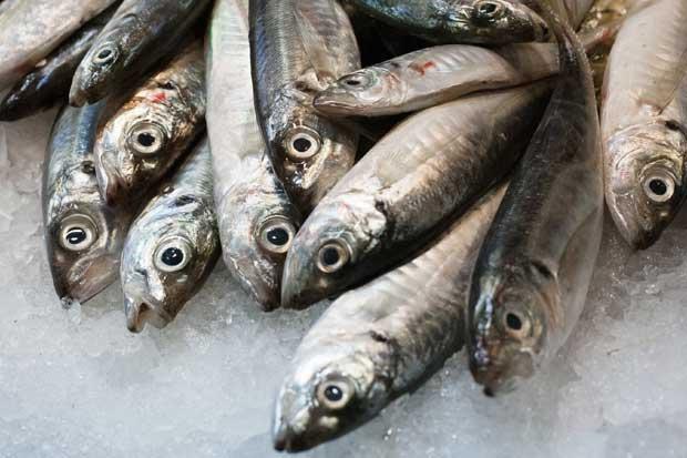 30% de los peces están sobreexplotados o agotados
