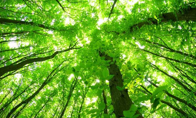 Parques nacionales de Guanacaste se reforestan con 500 árboles