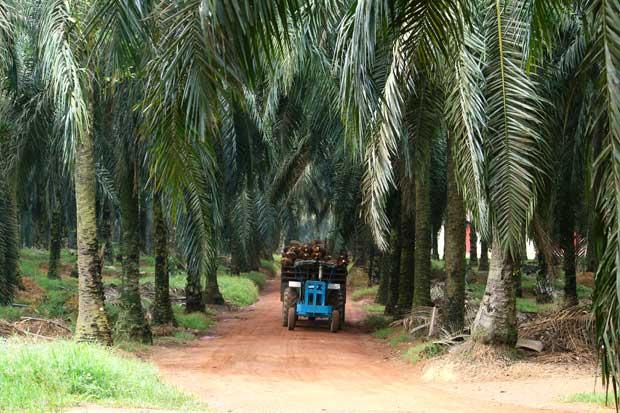 Unos 650 productores de Palma Aceitera fortalecerán la industria