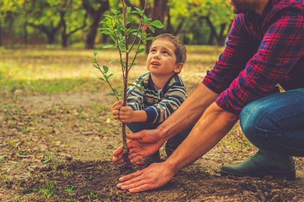 Unos 2.500 árboles harán de San José una ciudad más verde