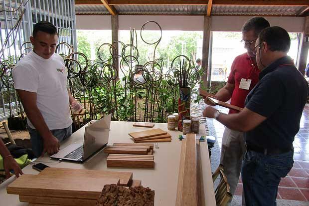 Bambú reactivaría la Zona Sur