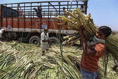 Azúcar a precio récord no lleva a aumentar producción en Brasil