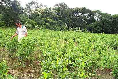 Colombia: El oro y la cocaína seguirán a pesar del acuerdo de paz