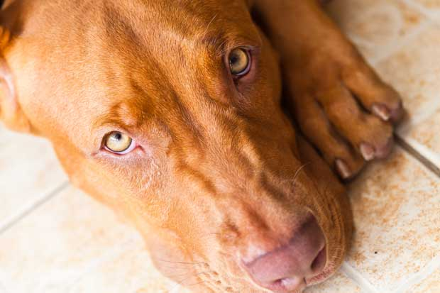 Inició campaña para recolectar firmas contra el maltrato animal