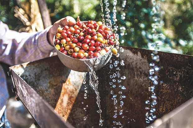 Repunte del café podría debilitarse por envíos de Brasil a EE.UU.