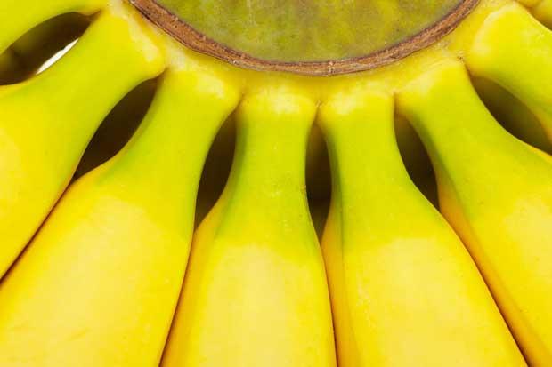 Proyectos sostenibles de bananeras protegen 10 mil hectáreas de bosque
