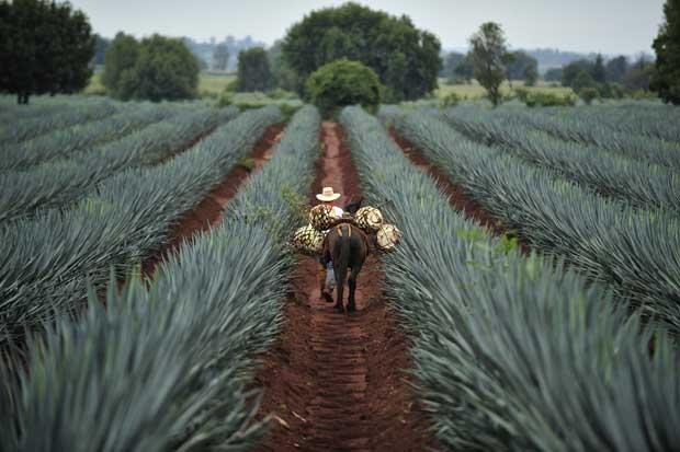 Ford trabaja con José Cuervo para realizar bioplásticos de agave