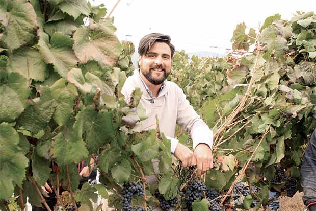 Vinos sostenibles llegan desde Chile