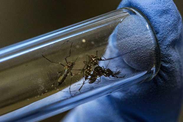 Salud eleva cifra de casos del virus del zika a 351