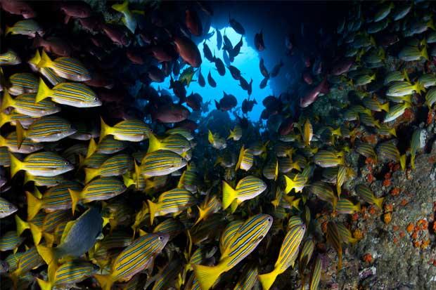 Isla del Coco tendrá nuevo radar para controlar pesca ilegal y narcotráfico