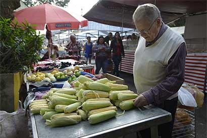 Por alza en precios, Brasil cultiva más maíz que soja
