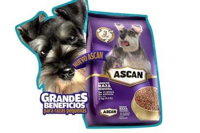 Ascan prentó nuevo alimento para Chihuahuas, Schnauzers y Poodles