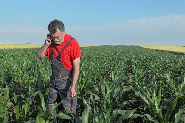 Nuevo sistema capacitará agricultores a través de celulares y redes sociales