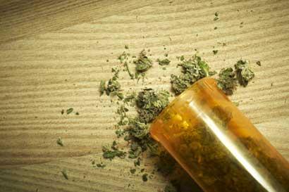 En Uruguay, el cáñamo podría ser mejor negocio que la marihuana