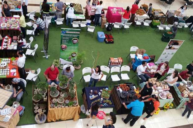 Brownie de aguacate destacará en feria orgánica en Lincoln Plaza