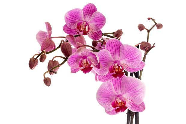 b59b90584 Expo Orquídea inicia mañana