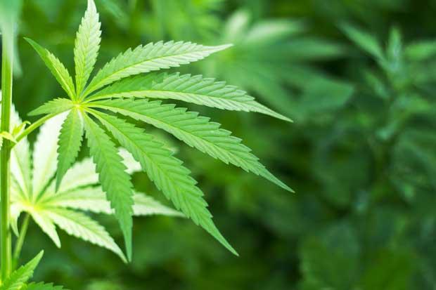 Expertos discutirán uso de marihuana medicinal y otras drogas en foro