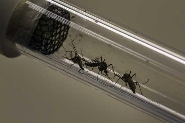 Temor a virus de Zika alienta competencia de diagnósticos