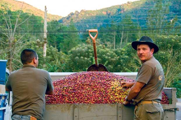 Degustaciones y show de barismo celebrarán Día Nacional del Café