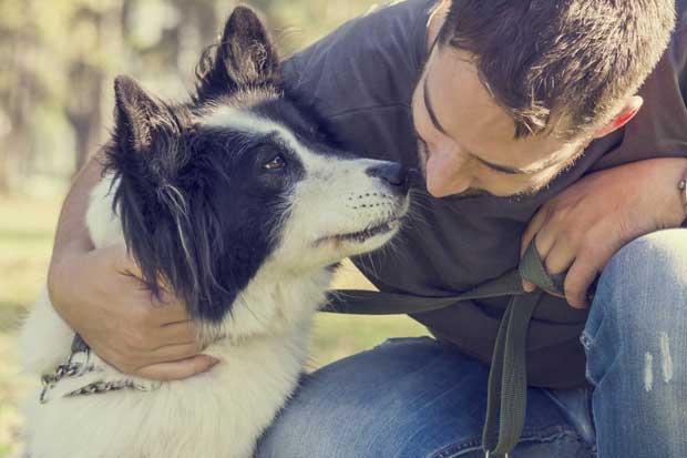 Más oficinas deberían pensar en abrir sus puertas a los perros