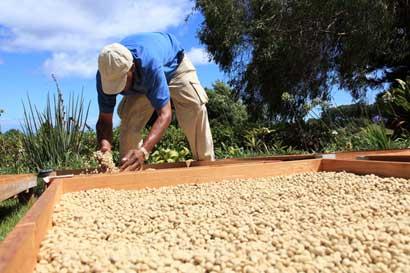 Defensoría investigará impacto de agroquímicos en el país