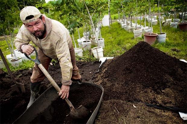 Programa de arborización llegará a la Reforma