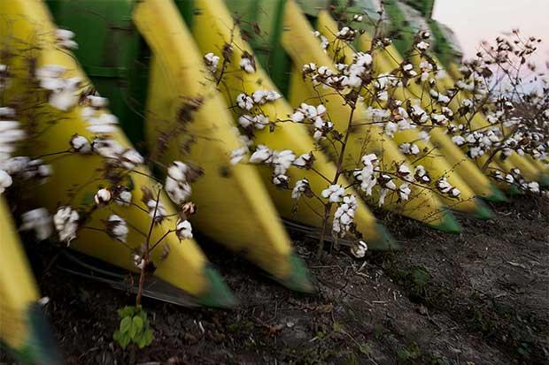 Unión Bayer-Monsanto es demasiado grande para la semilla de algodón
