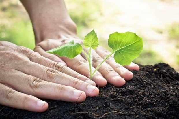 Costa Rica rompió récord de carbono neutralidad con siembra de árboles