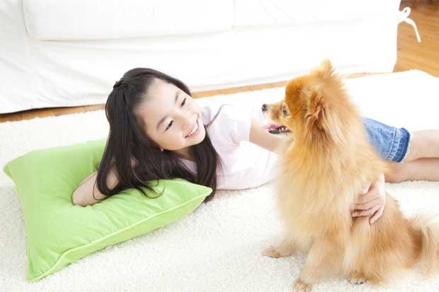 Japón tiene más mascotas que niños, y estas viven cada vez más