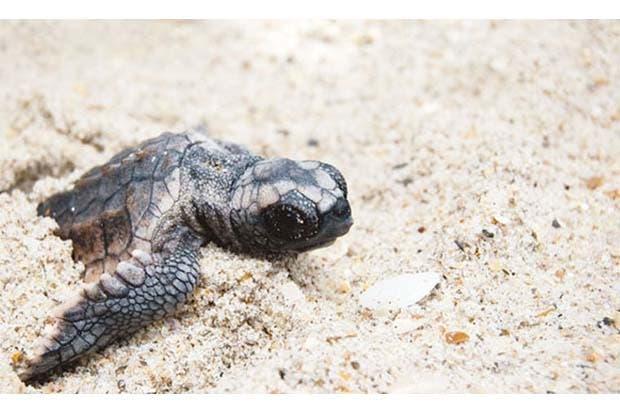 Zooave libera 260 tortugas en Guápiles