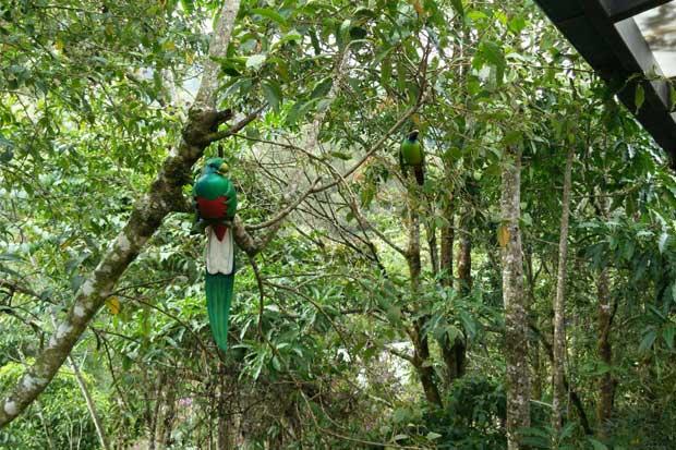 Artistas internacionales rinden homenaje a las aves de Costa Rica