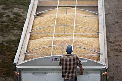 Ganancia de Monsanto es mejor apuesta que transacción de Bayer
